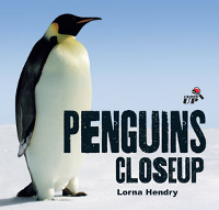 Penguins - Close Up